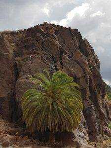 7a107721 24a6 4ecb aa41 7c05f2f4f447 225x300 - Klettern in Gran Canaria - Routen